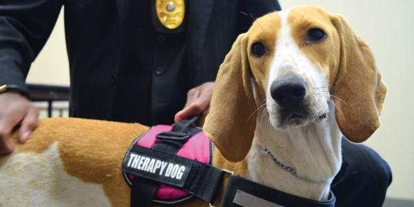 Τα THERAPY DOGS στη Διεθνή Έκθεση Θεσσαλονίκης