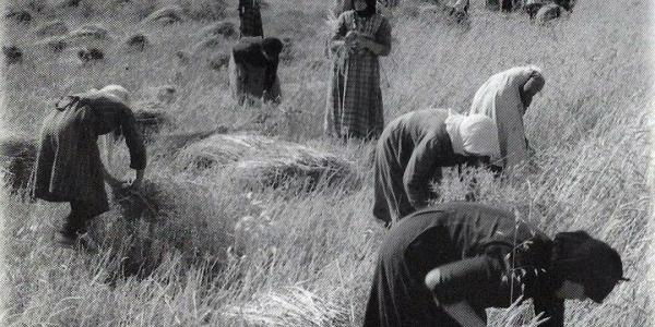 Ημερίδα  για την Ελληνίδα αγρότισσα