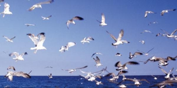 Δεδομένα καταγραφής θαλάσσιων απορριμμάτων σε ημερίδα στο ΑΠΘ