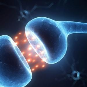 Η εντατική διδασκαλία ενισχύει τα νευρικά κυκλώματα στα παιδιά