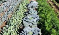 Για όγδοη χρονιά το ΑΠΘ προσφέρει λαχανόκηπους