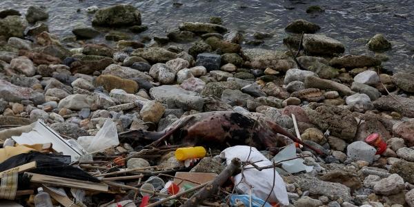 Εντατικοποίηση  για την προστασία των ακτών από τη ρύπανση