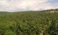 Σέιχ-Σου: ξεκίνησε η υλοτόμηση των κατεστραμμένων δένδρων από τον βλαστοφάγο