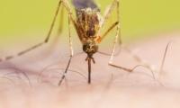 Διήμερη ενημερωτική εκδήλωση για την προστασία από τα κουνούπια