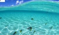 Art Project: Μια «θάλασσα» από τέχνες - Art combo: fish in action!
