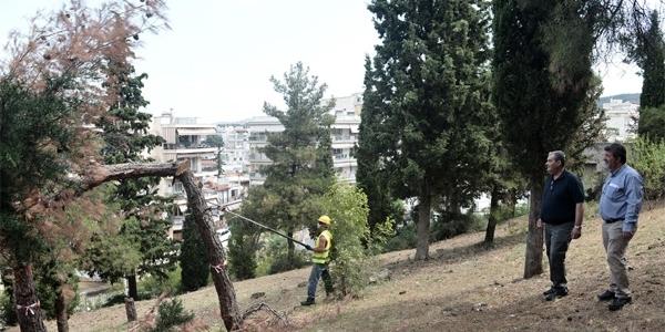 Υλοτόμηση ξηρών δένδρων στο Δημοτικό Άλσος Συκεών