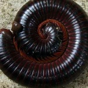 Μαύρα σκουλήκια σε περιοχές του  Λαγκαδά προκαλούν ανησυχία στους κατοίκους