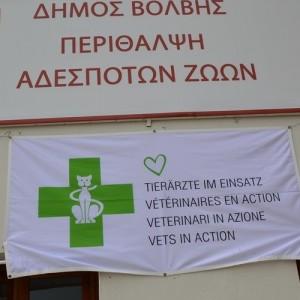 Δωρεάν στείρωση και εμβολιασμός αδέσποτων στην Βόλβη
