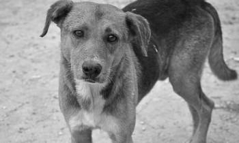 Δημοτικό καταφύγιο αδέσποτων ζώων ζητά η «Πόλη Ανάποδα»