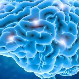 Υπάρχει «αρσενικός» και «θηλυκός» εγκέφαλος; Παρουσίαση συγγράμματος