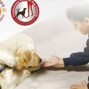 Ημερίδα: Σκύλοι Θεραπείας για άτομα με πολυαναπηρίες και ψυχικά προβλήματα