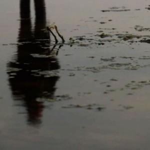 «Διόνυσος, η επιστροφή» σε σκηνοθεσία Σπύρου Τσιφτσή