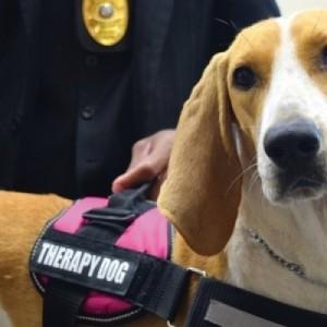 Σκύλοι θεραπείας: Θεραπευτικές παρεµβάσεις σε άτοµα µε αναπηρίες και ψυχικά προβλήµατα
