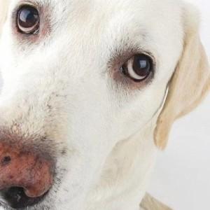 Κατά 78% αυξάνεται η πιθανότητα να κολλήσουν κορονοϊό όσοι βγάζουν τον σκύλο βόλτα