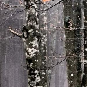 Κέλτικα και Σκανδιναβικά παραμύθια: online αφήγηση συνοδεία μουσικής με τη Λαμπρινή Γιώτη