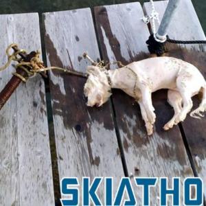 Σκιάθος: Έδεσαν σκυλάκι σε σωλήνα και το έπνιξαν