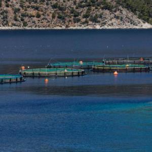 Η Ελληνική Οργάνωση Παραγωγών Υδατοκαλλιέργειας  χορηγός στο Blue Economy Οικονομικό Forum Δελφών