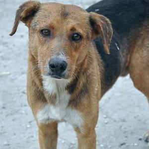 Ελεγχοι για την τήρηση της Νομοθεσίας για τα δεσποζόμενα και αδέσποτα ζώα