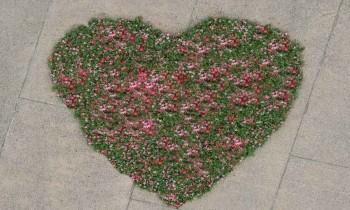 Μια… καρδιά λουλούδια για τις μητέρες από τον Δήμο Θεσσαλονίκης