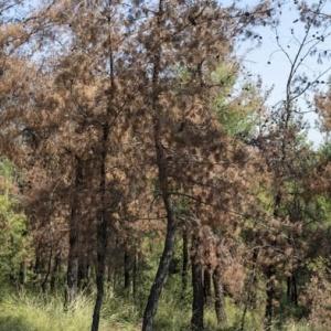 Αεροψεκασμοί  στο περιαστικό δάσος Θεσσαλονίκης