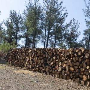 Ανακύκλωση Χριστουγεννιάτικων δέντρων στο Δήμο Καλαμαριάς