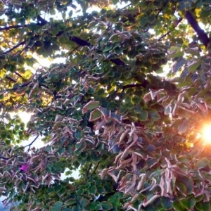 Με νοτιάδες ο καιρός την Πέμπτη στη Θεσσαλονίκη