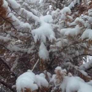 Χιονίζει στο κέντρο της Θεσσαλονίκης - Χαμηλές θερμοκρασίες