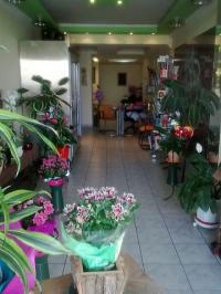 Ορχιδεα - άνθη - φυτά © goTHESS.gr