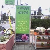 Ορχιδεα - άνθη - φυτά